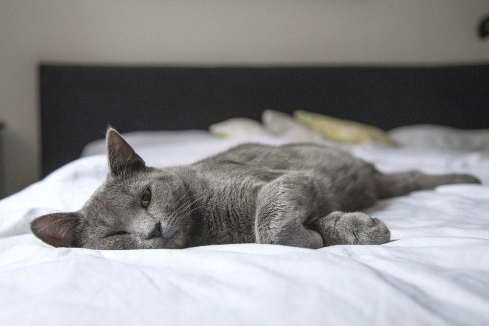 Vacanza con il gatto: cosa sapere prima di partire