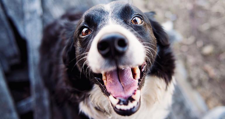 Quale è la razza di cane più adatta a una famiglia con bambini?