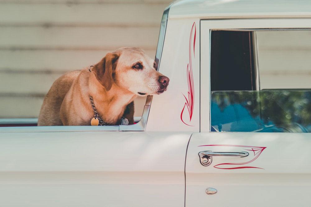 Come trasportare il cane in auto?