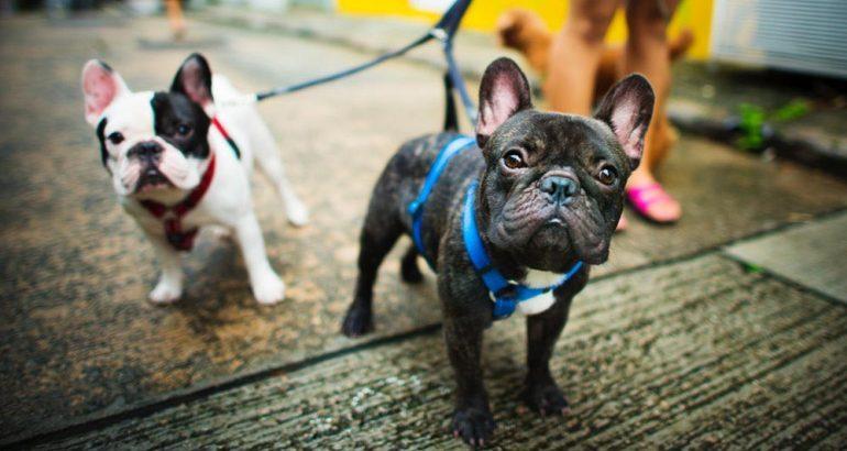 Un dogsitter per amico: quale assicurazione scegliere per il tuo cane?