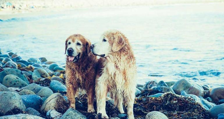 Quali sono le vaccinazioni obbligatorie per il cane?