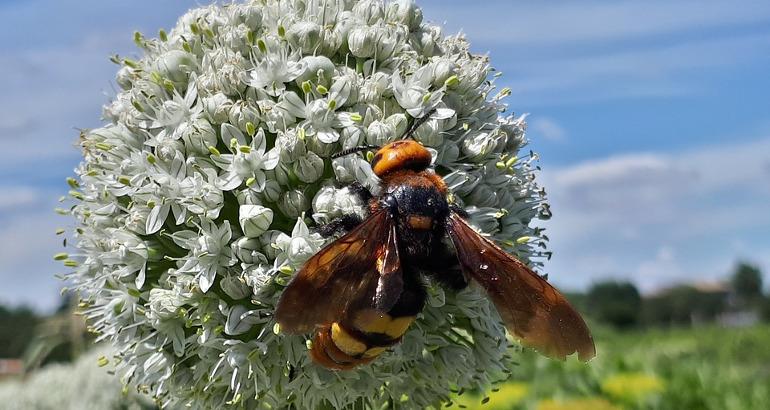 Punture d'insetto in vacanza: cosa fare?