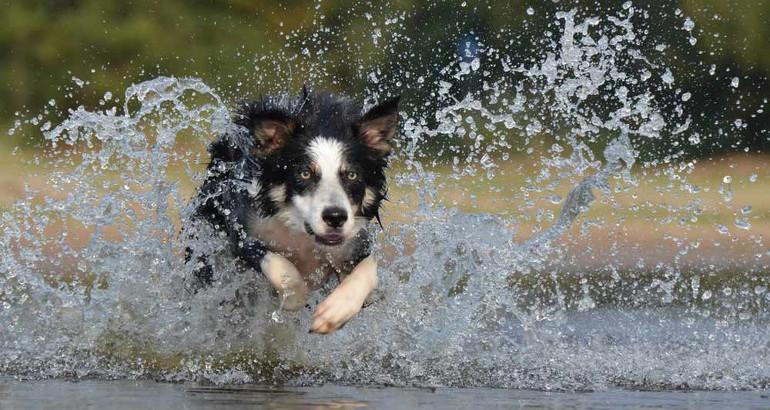 Quale razza di cane scegliere se fai una vita attiva