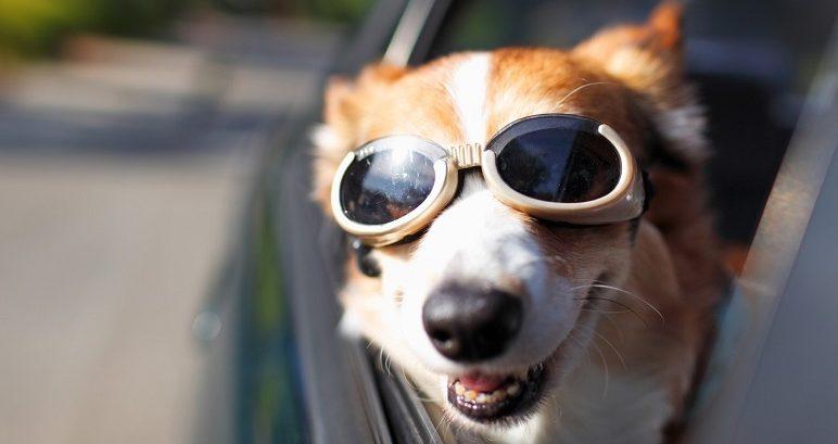 Trasportare un cane in auto: cosa dice il Codice della Strada