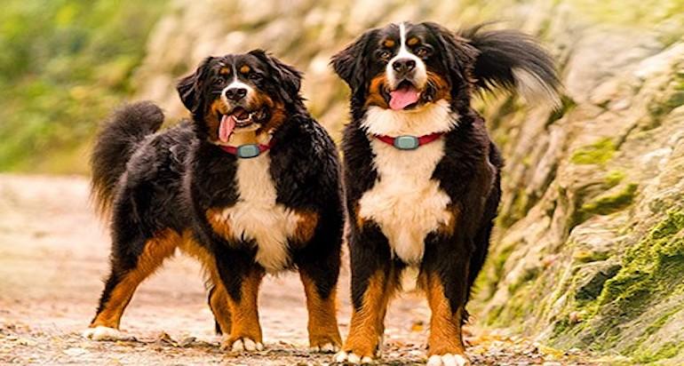 Localizzatore cani offerte: 6 consigli